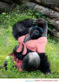 Lady Gorilla